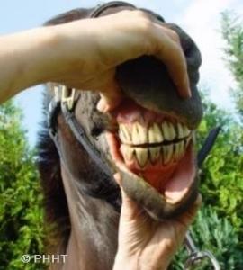 controle van slijmvliezen paard