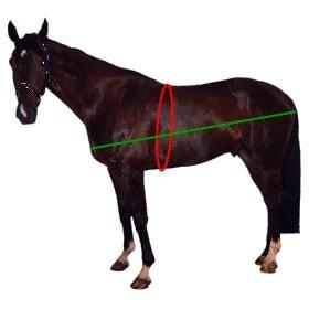 Gewicht van een paard berekenen