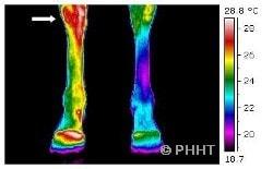 thermografie achterbenen